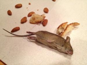 Rat Zapper Gets Mouse